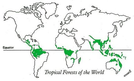 Climate/Weather - Welcome To The Amazon Rainforest